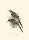 Birds in Nature III Posters by J.C. Keulemans