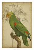 Parrot and Palm III Prints