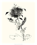 Studies in Ink - Rose I Posters by Nan Rae