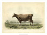 Vache D&#39;Angeln Posters by I. Bonheur
