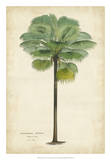 Palm of the Tropics II Pósters por Van Houtteano