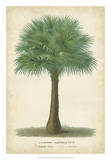 Palm of the Tropics I Giclee Print by  Van Houtteano