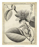 Passiflora IV Giclee Print by Charles Francois Sellier