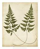 Fern Portfolio I Giclee Print by Francis G. Heath
