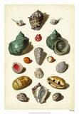 Muller Shells, Tab. V Print by Gabriel Muller