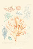 Delicate Coral IV Posters by F. Reeve