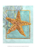 Starfish and Coral Posters by Lori Schory
