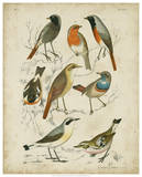 Non-Embellished Avian Gathering I Posters by G. Lubbert
