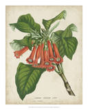 Tropical Array VI Poster by Van Houtteano 