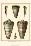 Redoute Shells I Prints by Pierre-Joseph Redout&#233;