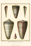 Redoute Shells I Prints by Pierre-Joseph Redouté