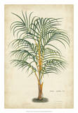 Palm of the Tropics III Prints by Van Houtteano 