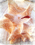 Conch I Print by Lisa Hill Saghini