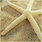 Starfish Prints by Lisa Hill Saghini