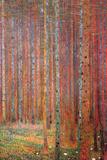 Tannenwald Art by Gustav Klimt
