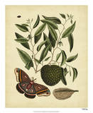 Catesby Moth, Pl. T86 Giclee Print by Mark Catesby