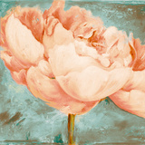 Beautiful Peonies Square II Poster by Patricia Quintero-Pinto
