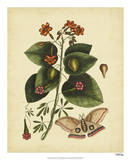 Catesby Moth, Pl. T91 Giclee Print by Mark Catesby