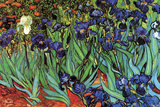 Irises Prints by Vincent van Gogh
