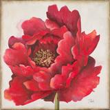 Rote Pfingstrose Kunstdrucke von Patricia Quintero-Pinto