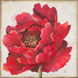 Red Peony Posters by Patricia Quintero-Pinto