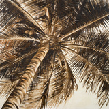 Coconut Palm II Posters by Patricia Quintero-Pinto