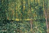 Vincent van Gogh - Stromy a lesní podrost, c.1887 Plakát