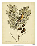 Catesby American Goldfinch, Pl. T43 Posters by Mark Catesby