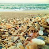 Shells Beach I Art par Lisa Hill Saghini