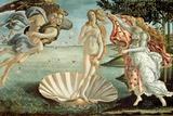 Sandro Botticelli - Venüs'ün Doğuşu, c.1485 - Reprodüksiyon