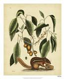 Catesby Ground Squirrel, Pl. T75 Lámina giclée por Catesby, Mark