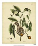 Catesby Flying Squirrel, P. T76 Lámina giclée por Catesby, Mark