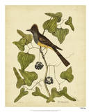 Catesby Crest. Fly-Catcher, Pl. T52 Giclee Print by Mark Catesby