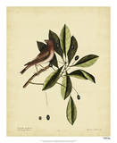 Catesby The Purple Finch, Pl. T41 Print by Mark Catesby
