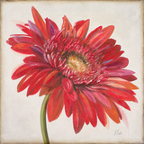 Red Gerber Daisy Prints by Patricia Quintero-Pinto