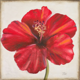 Red Hibiscus Poster by Patricia Pinto