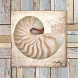 Beach Shell III Prints by Elizabeth Medley