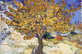 Mulberry Tree, c.1889 Prints by Vincent van Gogh