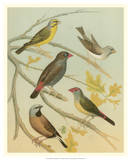 Birdwatcher's Delight IV Giclee Print by  Cassell