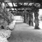 Garden II Print by C.J. Stanz