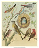 Birdwatcher's Delight I Giclee Print by  Cassell
