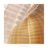 Organic Elements III Giclee Print by  Vision Studio