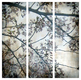 Cherry Blossoms Triptych Giclee Print by Tony Koukos