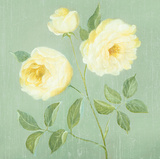 Abundant Rose I Giclee Print by Mimi Roberts