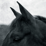 Horse Head Giclee Print by Pete Kelly