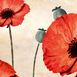 Poppy Love Giclee Print by James Worthington