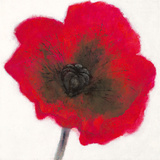 Poppy Giclee Print by Emma Forrester