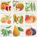 Summer Bounty Giclee Print by Jennifer Abbott