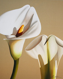 Smooth Lilies Giclee Print by Carolina Alotus