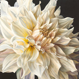 White Light Giclee Print by Sarah Caswell